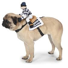 pug halloween costume for baby amazon com zack u0026 zoey show jockey saddle dog costume large