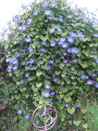 trellis flower garden i love gardening pinterest gardens