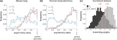 plos computational biology do vascular networks branch optimally