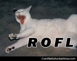 Rofl Meme - can it be saturday now com rofl cat