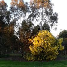 oz native plants oz plants nursery cowra home facebook