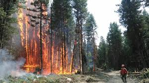 Wildfire Bc Whistler by Wildfire Emergency A Week Under Threat In The B C Interior