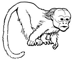 printable coloring pages monkeys coloring pages of a monkey chinese new year of the monkey coloring