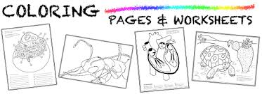 coloring pages worksheets coloring pages and worksheets ask a biologist