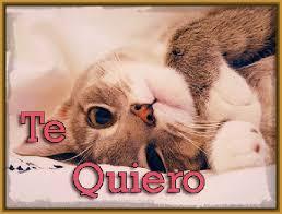 imagenes con frases de amor super tiernas tiernas frases de amor con gatitos gatitos tiernos