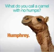 Hump Day Camel Meme - pre hump hump day quiz thepubliceditor com