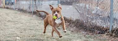 welcome to the town of branford connecticut animal shelter homepage