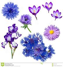 blue and purple flowers blue violet flowers collection royalty free stock photo image
