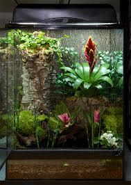 lizard terrarium plants from around the world infolific