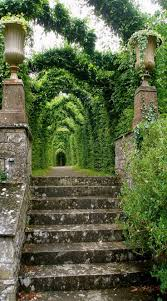 Irish Home Decorating Ideas Top 25 Best Nature Ideas On Pinterest Beautiful Nature Pictures
