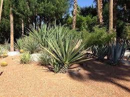 151 best desert landscaping ideas images on pinterest