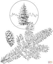 white spruce tree coloring page free printable coloring pages
