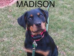 hidden dog fence customer photo gallery stateline dogwatch