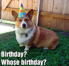 Corgi Birthday Meme - download corgi birthday meme super grove