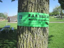 Emerald Ash Borer Map Corps Promotes Emerald Ash Borer Awareness For Memorial Day
