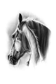 dressage horse by paulina stasikowska how to pinterest