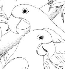 scarlet macaw coloring page list of birds of panama wikipedia