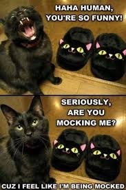 Funny Cat Meme Pictures - funny cat meme lol