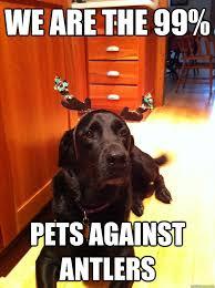 Christmas Dog Meme - christmas as seen by the dog the poodle and dog blog