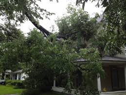want to save your roof take care of your trees