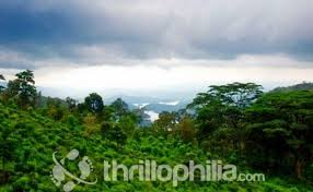 eastern and western ghats south zone southern western ghats birding tour thrillophilia