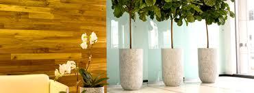 5 tall indoor plants ambius us
