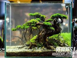 Aquascape Tree Best Small Aquariums Nano Tank Buyers Guide And Reviews