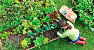 how to take care of plants at home how diy home plans database