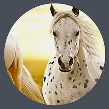 papier peint chevaux pour chambre papier peint chevaux pour chambre best papier peint pour chambre
