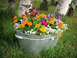 Bathtub Planter Toilet Bowl Tomatoes And Bathtub Basil Organic Gardening