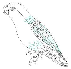 pencil sketches and drawings how to draw a parrot