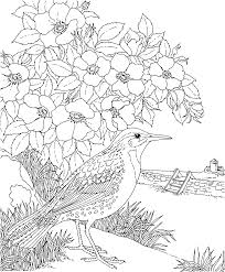 free printable coloring page north dakota state bird and flower