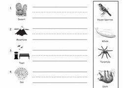 1st grade life science worksheets u0026 free printables page 2