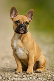 what to look for when buying a puppy the happy puppy site