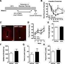 hypothalamic neurogenesis is not required for the improved insulin