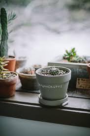 319 best houseplants images on pinterest indoor plants plants