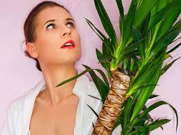 Yucca Wohnzimmer Yucca Umpflanzen So Setzen Sie Ihre Palmlilie Um