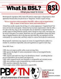 american pitbull terrier info 9 best pit bull info images on pinterest pit bulls animal