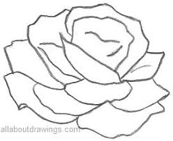 simple rose pencil sketches rose drawinds pinterest simple