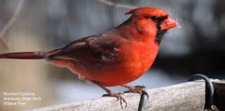Kentucky birds images Kentucky wild birds wild bird co bird feeding watching jpg