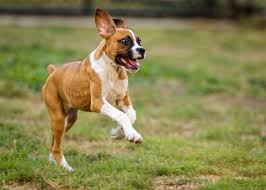 hyperactive dogs hyperactive dogs daily walks is the solution animal builder