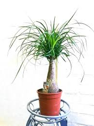 indoor plants that need no light plants that need no light plants light denverfans co