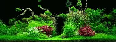 jungle aquascape u2013 aquarium architect custom fish tanks sydney