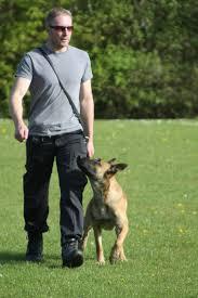 belgian sheepdog youtube belgian malinois try before you buy positive police dogs