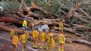 Tree San Diego Dies After Trees Falls Onto Cars In Pacific Nbc 7 San