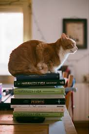 576 best cats and books images on pinterest books kitty cats