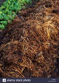 mulch of horse manure stock photo royalty free image 21895164