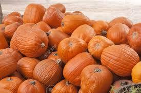 thanksgiving farm pumkin orange vegetable halloween thanksgiving harvest farm stock