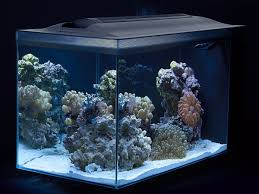 Reef Aquarium Lighting Experts Select The Best Saltwater Aquariums On The Market