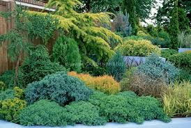 evergreen shrub garden on hill slope with conifers evergreens